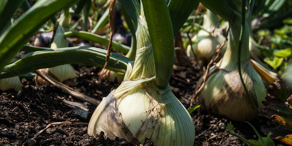 We Want You to Test Next-Gen Onion Services | Tor Blog